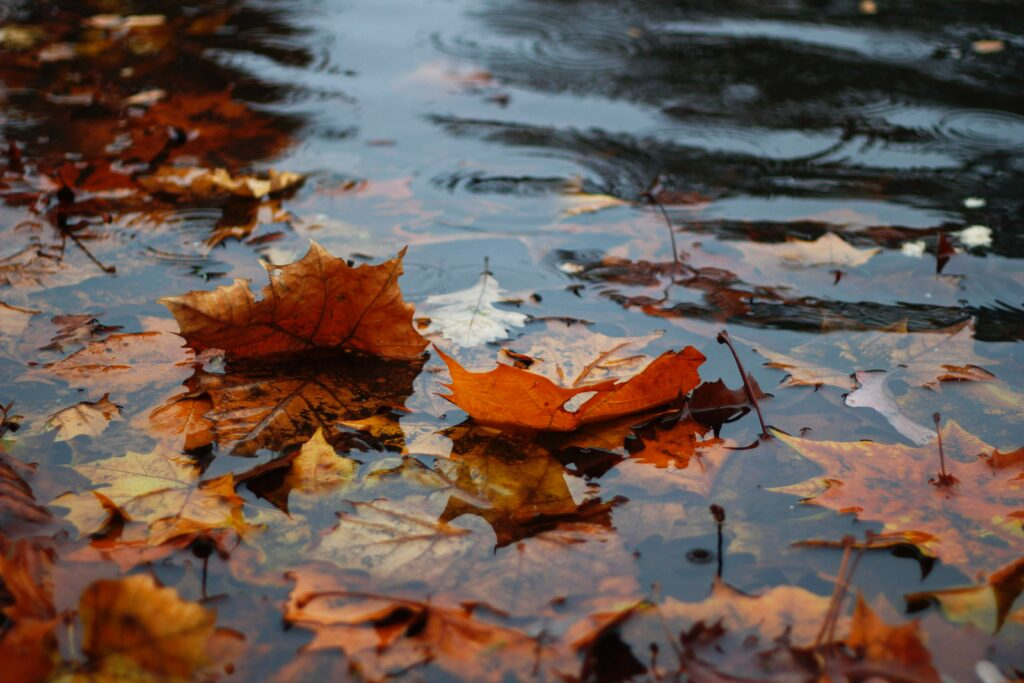 How Do I Prepare My Pond For Winter? - Leaves